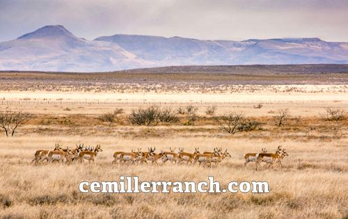 Pronghorn CE Miller Ranch
